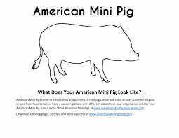 ampa store mini pig books shopping gifts for mini pig parents