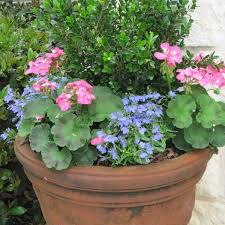 161 best containerology images on pinterest container garden