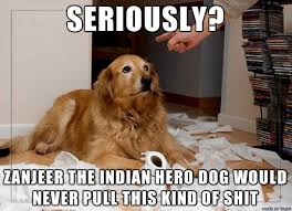 High Dog Meme - zanjeer the indian hero dog set the bar impossibly high for every