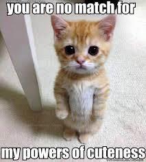 Funny Kitten Meme - awwwwwwwwwww cats pinterest cat and animal