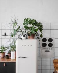 plantes cuisine 8 ères de sublimer la cuisine grâce aux plantes cocon de
