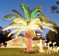 lovely decorating palm trees for christmas peachy winter s little