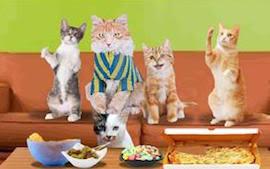 turkish angora cat cards birthday thank you holidays u0026 more