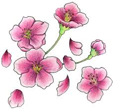 cherry blossom tattoo designs photo 3 photo pictures and