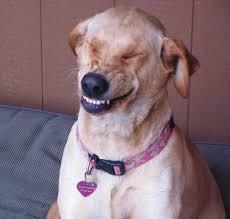 Dog Smiling Meme - phish net do dogs smile
