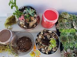 plant night succulent terrarium pots pottery