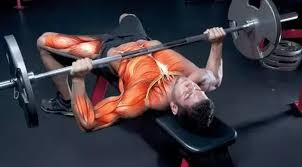 What Do Bench Presses Work Out What Are Typical Work Out Weight Ratios For Some Compound And