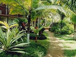 Tropical Landscape Ideas by Tropical Front Yard Landscaping Ideas