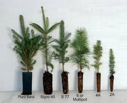 tree seedlings decor
