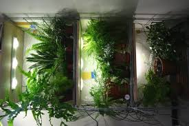 indoor planting this is why indoor planting lights is