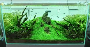 membuat kotak filter aquarium hr water filter cara membuat filter aquascape filter aquarium