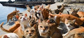 cat island weird places around the world cat island