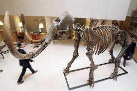 u0027s mammoth tusk scientists unveil plans clone extinct