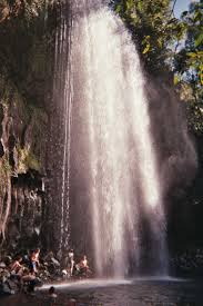 weed out weeds in the rainforest kuranda conservation milla milla falls australia cairns travel waterfall river