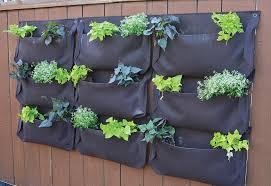 Urban Wall Garden - urban plantings bee culture