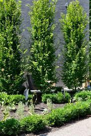 147 best columnar trees images on pinterest garden trees