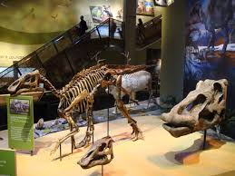 alaska dinosaur exhibit opens in dallas museum alaska media