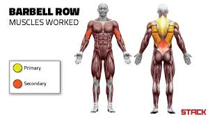 Bench Barbell Row 5 Ways Everyone Screws Up Barbell Rows Stack
