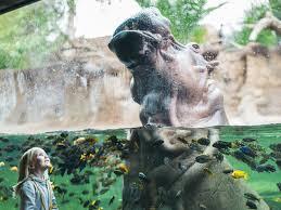 san antonio zoo lights coupon san antonio zoo tour texas