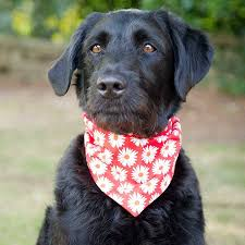 neckerchief prints by redhound for dogs