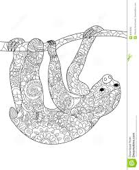 sloth on a branch coloring book vector for adults stock vector
