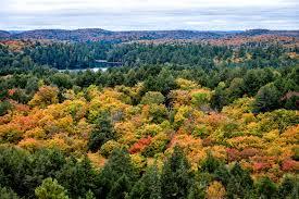 fall colours algonquin park