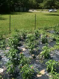 Vegetable Garden Blogs by Perennials Borders Around A Vegetable Garden U2013 The Booberry Blog