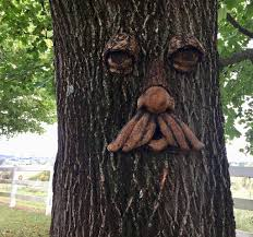 tree face tree faces the garden and patio home guide