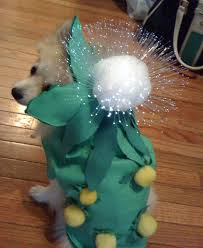 Digger Halloween Costume 9 Adorable Diy Pet Costume Ideas Halloween 6 9