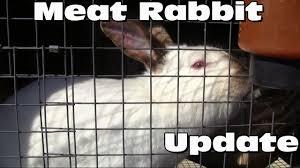 raising meat rabbits the herd youtube