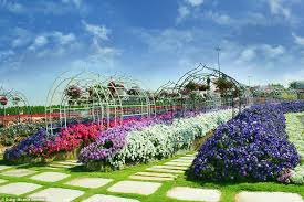 rainbow coloured oasis with 45m flowers is in the middle of a