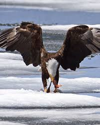 Wyoming wild animals images 79 best wy wildlife images wyoming national parks jpg