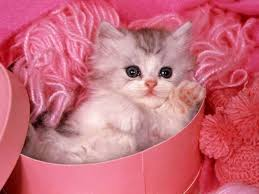 Cute animals!! :) Images?q=tbn:ANd9GcRDJTdSNGApH_K1AgAeAAxHB6par2uI_6TJ0ryf2IV65Vktse2tVg