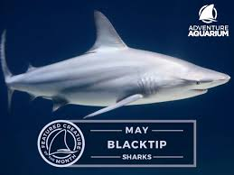 sharks spotlight memorial weekend u2013 adventure