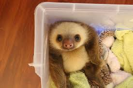 sloth in a box sloths your meme