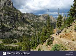 pine trees in the rocky mountain national park in colorado state