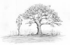 pictures pencil sketching for beginners drawing art gallery
