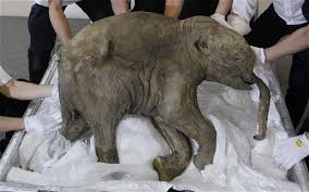 woolly mammoth roam extinct dna merged