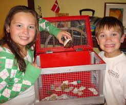 how to build a hermit crab or other small critter cage 7 steps
