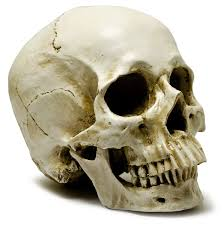 human skull decoration be fabulous