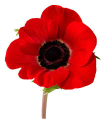 7 things you didn u0027t know about the poppy her campus