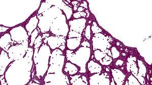 purple paint splash in air filmed in slow motion with alpha