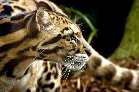 Cool Animal Wallpapers by Animal Kingdom Cool Pets Animal Planet Free Animal Images