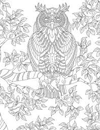 coloring page for adults owl owl coloring pages for adults google search color pages