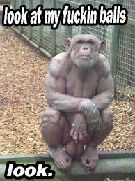 Funny Monkey Memes - blue balls maybe ha ha from shonda with love pinterest humour