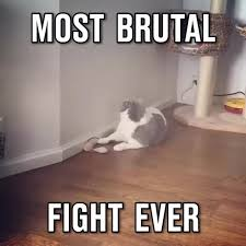 Cat Fight Meme - most brutal cat fight find make share gfycat gifs
