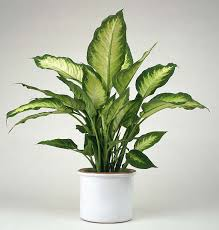 a z of houseplants that are poisonous to your cats pethelpful