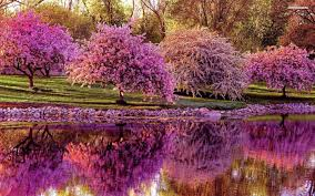 spring pics for wallpaper best cool wallpaper hd download