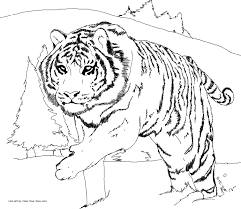 download tiger animal coloring pages