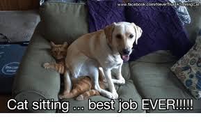 Cat Sitting Meme - wwwfacebookcomnevertrustasmlingcat cat sitting best job ever